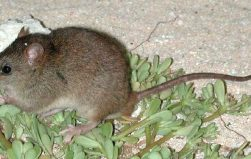 Scientists declare first mammal extinction due to climate change