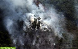 Indonesian parliament to investigate fire-linked firms in Riau