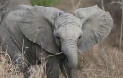 From endangered species to commodities: report reveals scale of wildlife crime