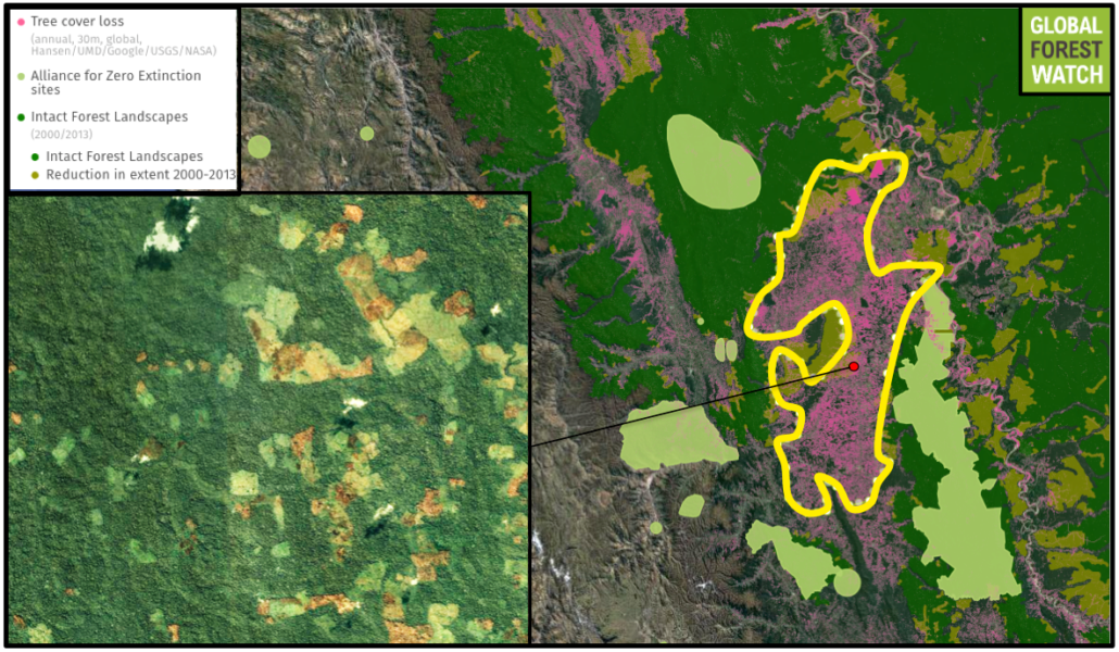 The region contains intact forest landscapes (IFLs), which are particularly large, continuous, and undisturbed tracts of primary forest. Those within the approximated deforestation hotspot show degradation since 2001. The hotspot is also close to - and in one case overlaps with - Alliance for Zero Extinction (AZE) sites that demarcate the ranges of threatened, endemic species. Data from Hansen/UMD/Google/USGS/NASA, accessed through Global Forest Watch.