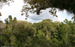 Study: Drought impedes tree growth, shuts down Amazon carbon sink
