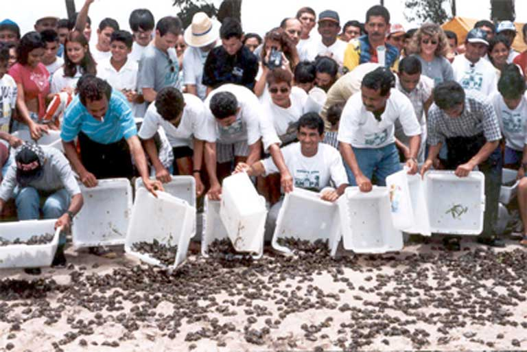 Hundreds of hatchlings head toward the water — just a few of the 70 million that the Amazon Turtle Program has released so far. Photo courtesy of IBAMA