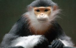 Unknown, ignored and disappearing: Asia's Almost Famous Animals