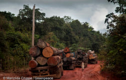 Even reduced-impact logging in the Amazon may be unsustainable