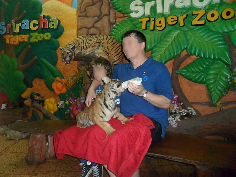 At Sriracha Tiger Zoo 10 to 20 tiger cubs are kept all day in small cages in a room. Hundreds of visitors visit these cages daily or pay for selfies with the cubs or feed them with milk bottles. Photo by Pescov, Wikimedia Commons, licensed under the Creative Commons Attribution-Share Alike 3.0 Unported