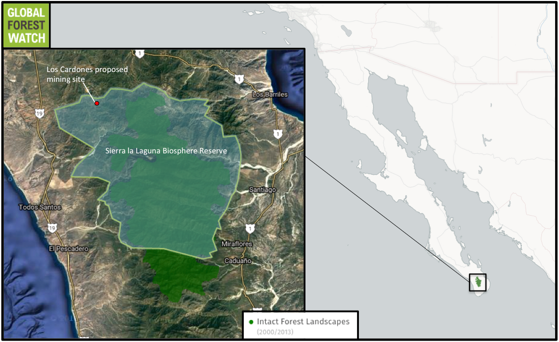 Global Forest Watch shows Sierra la Laguna Biosphere Reserve contains Baja California's only Intact Forest Landscape: a large, relatively undisturbed tract of primary forest that still has its original levels of biodiversity. The proposed Los Cardones gold mine is sited approximately five kilometers (three miles) from the IFL.