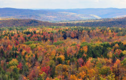 Deforestation has been occurring continuously in New England since the 1980s