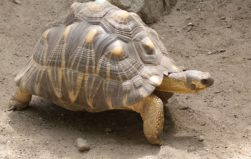 China jails 7 people, including airport employee, for smuggling rare tortoises