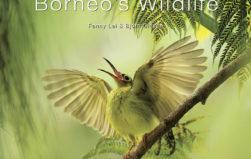 PHOTOS: 'A Visual Celebration of Borneo's Wildlife'
