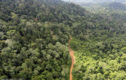 Researchers say addressing the second D in REDD can benefit the climate while ensuring timber harvests