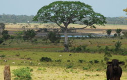 Beef consumers' role in causing deforestation in South America (commentary)