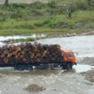 Myanmar's forests face myriad problems as logging ban continues
