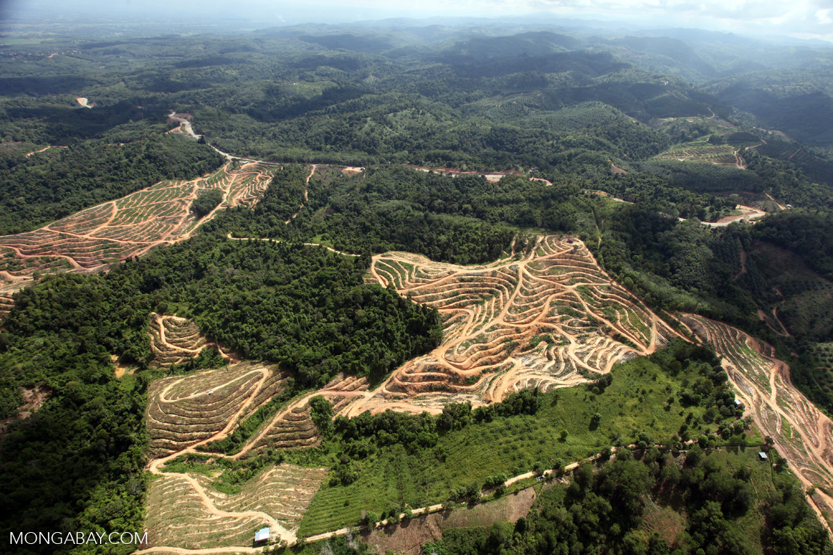 Deforestation for oil palm in Sabah, Malaysia. Photo by Rhett A. Butler