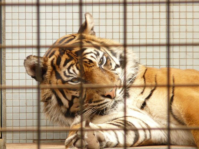 essays on cruelty to animals Animal abuse essay: by daniel gonzalez-tucker how would you feel if you were thrown in a cage just for an experiment how would you feel if every day you were abused.