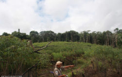 How to increase REDD+ benefits to indigenous peoples and other traditional forest communities
