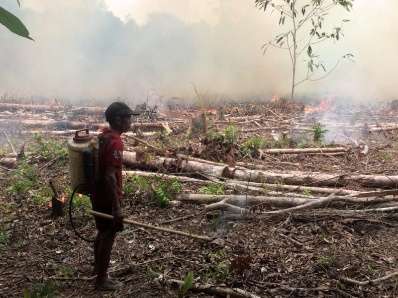 A Dayak Iban man burns his field. Photo by Cory Rogers