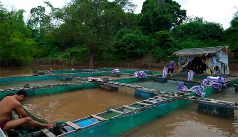 A fishfarm in Louangphabang, Laos. Photo by jmbaud74 CC-BY-NC-SA 2.0 (Flickr)