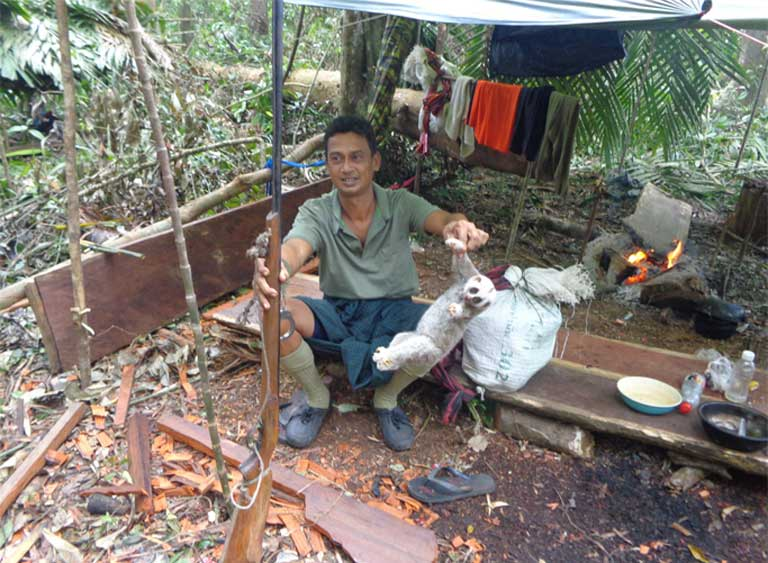 It's not just Pileated gibbons that are under threat from Siamese rosewood poachers. Here in a makeshift illegal logging camp, a logger holds up a dead slow loris. Photo courtesy of Thailand's Department of National Parks, Wildlife and Plant Conservation