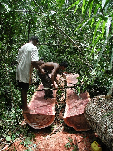 "Logging ""bulletwood"" in the Berbice River, Guyana in 2006. Photo by Jesse Knight via Wikimedia Commons"