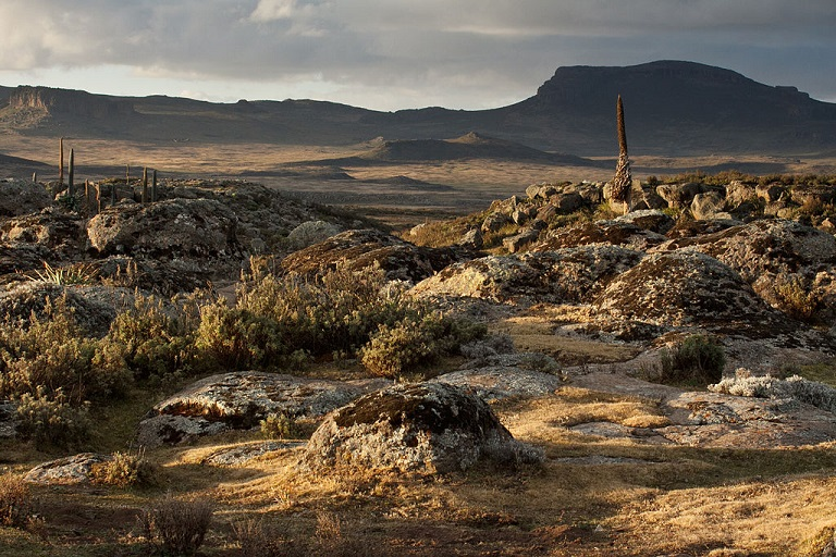 Bale Mountains National Park, Ethiopia. Photo by Indrik Myneur via Wikimedia Commons