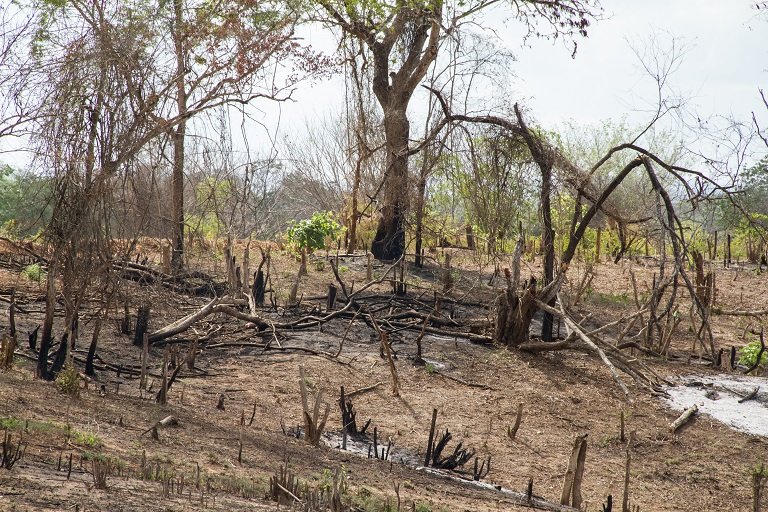 Farmers set fire to the forest and then clear the remaining trees for their plot. During a survey of farmers in the area, many responded they believed farming on virgin land produced higher yields, and crops grown on previously forested land required less maintenance. Photo by Sophie Tremblay for Mongabay.