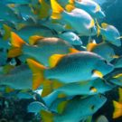 Marine protected areas suffer from lack of funds, staff