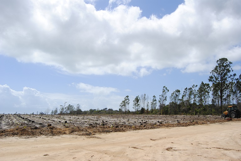 A field after eucalyptus has been harvested. Photo by Ignacio Amigo for Mongabay