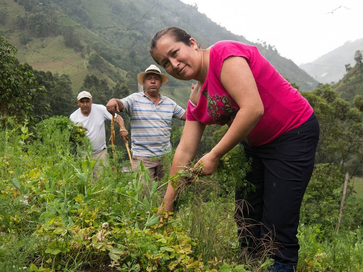 Area resident Luz Dary works in her vegetable field. Photo by Bram Ebus for Mongabay.