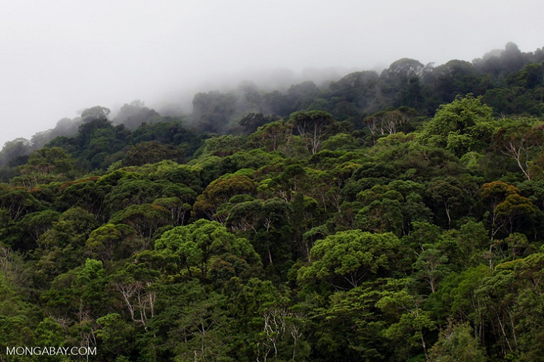 Rainforest of Isla Gorgona, Colombia. Photo by Rhett A. Butler