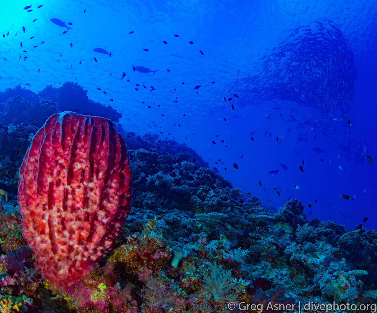 greg_asner_spratly_islands_5056