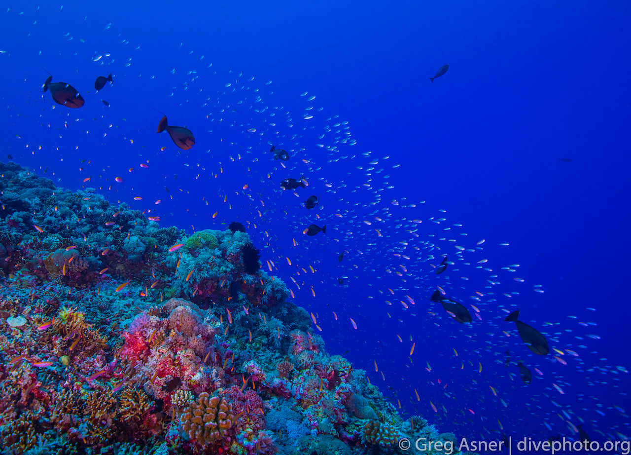 greg_asner_spratly_islands_5676