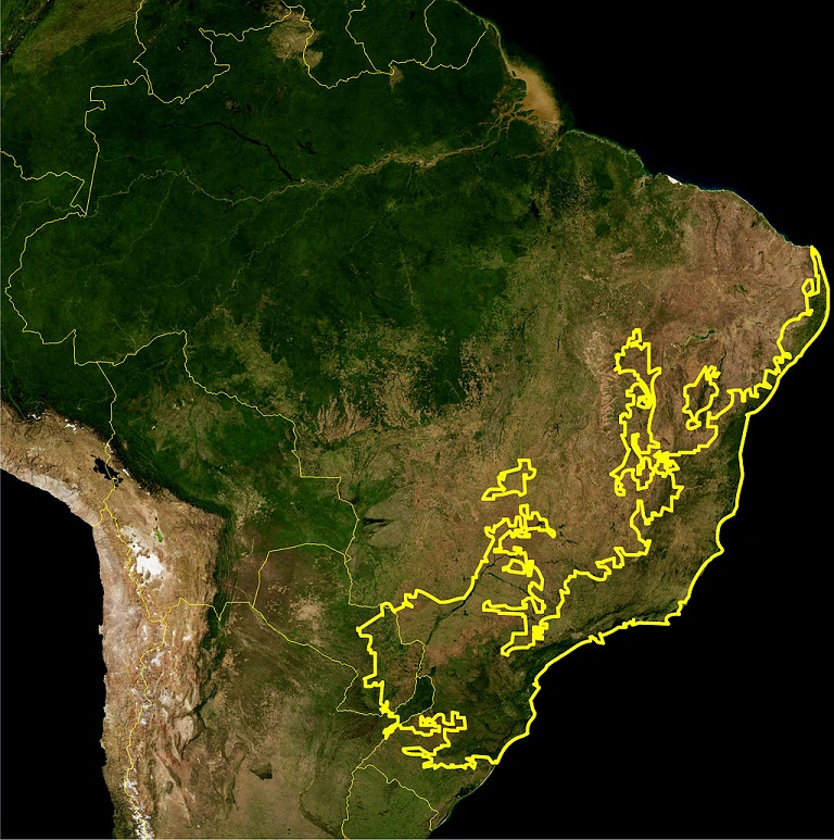 The Atlantic Forest, as delineated by the WWF. Image by NASA and Miguelrangeljr via Wikimedia Commons.