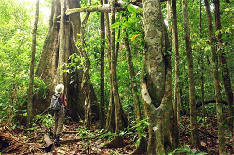 Los grupos indígenas, los mejores protectores del Amazonas, bajo ...